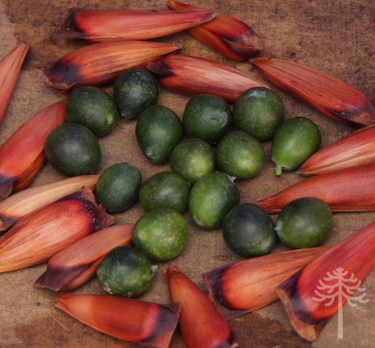fruto de la estación en marzo