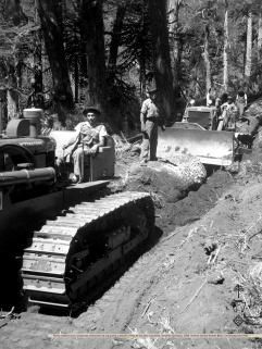 Extracción de araucarias en Lonquimay